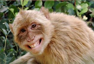 14++ Foto hewan monyet lucu terupdate